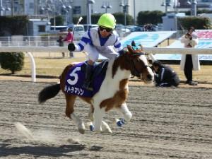 120219ポニーレースin川崎-レース-09