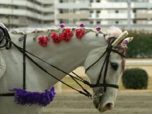 川崎競馬の誘導馬 1月後半開催 平場Ver アロワナリングくん 4