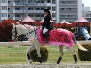 川崎競馬の誘導馬 4月開催 桜Ver シロくん 2.jpg